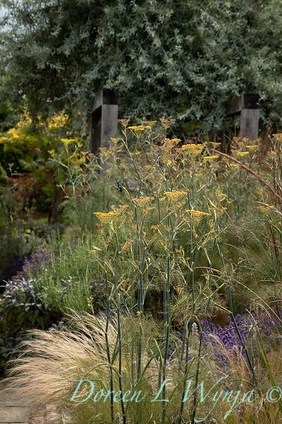 Beechleigh Garden - Jacky O'Leary garden designer_2980.jpg