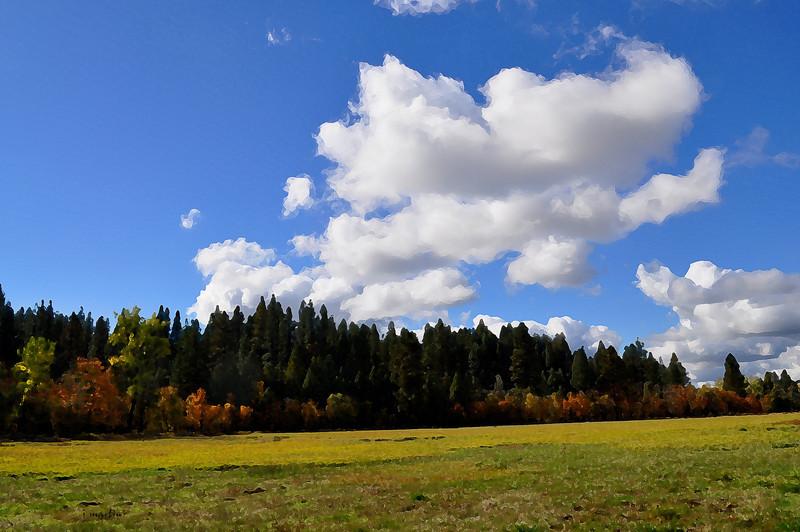 meadow 11-18-2010.jpg