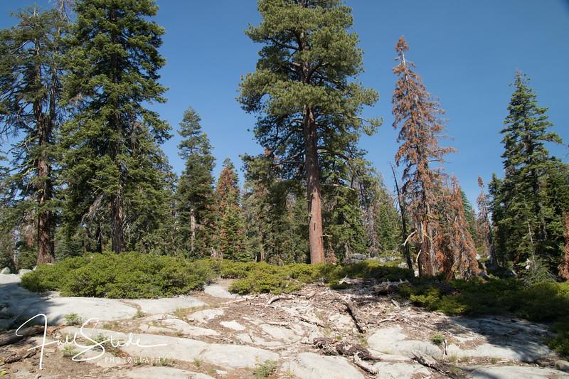 Yosemite 2018 -39.jpg