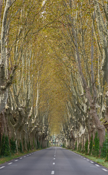 a paved road passing through a tunnel of trees