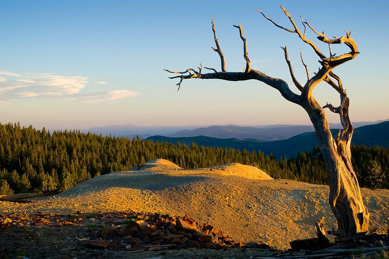 'Dali Tree' - Bonanza, Colorado