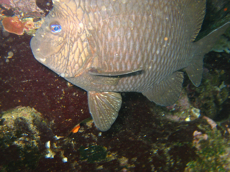 Diving in the Galapagos (55 of 392)