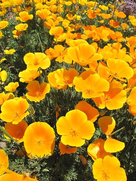 amh FLOWERS (1025).jpg