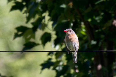 Beguiling Birds