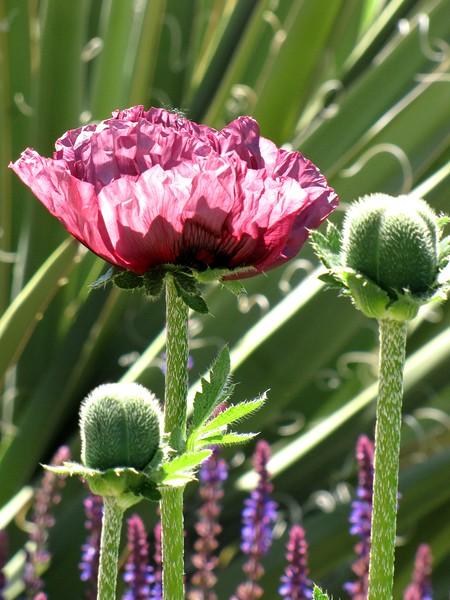 amh FLOWERS (1063).jpg