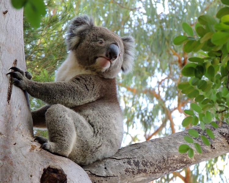Australia 013 N.jpg