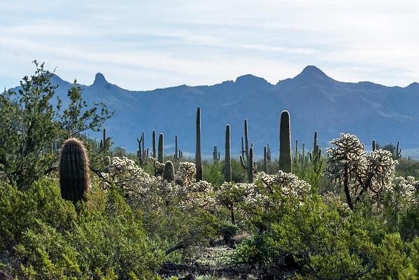 2015 Ajo, Arizona