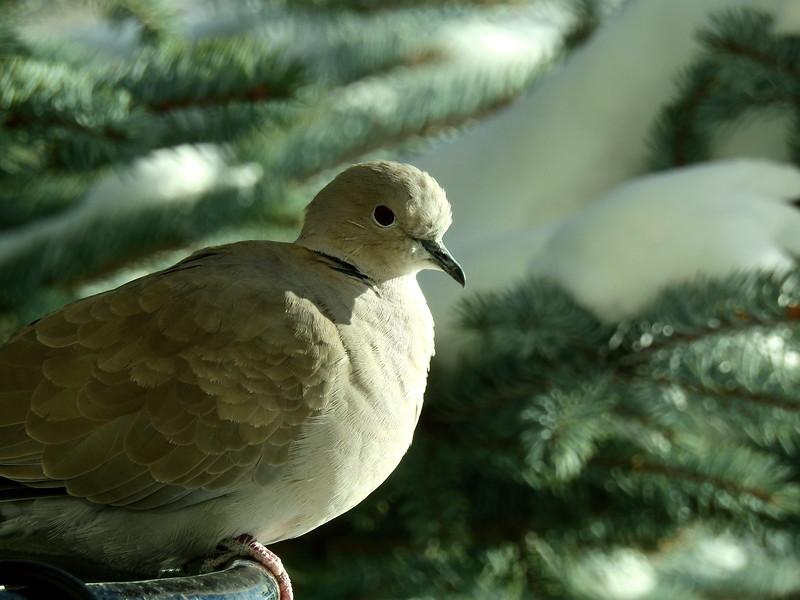 birds (196).JPG
