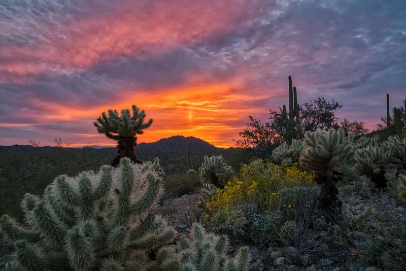 Organ Pipe Cactus 2020-7.jpg