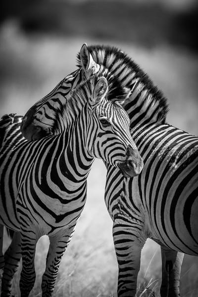 Botswana_June_2017 (628 of 6179).jpg