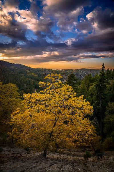 San_Gabriel_Mountains_Fall_Color_DSC3165.jpg
