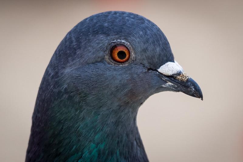 December 15 - Bird.jpg