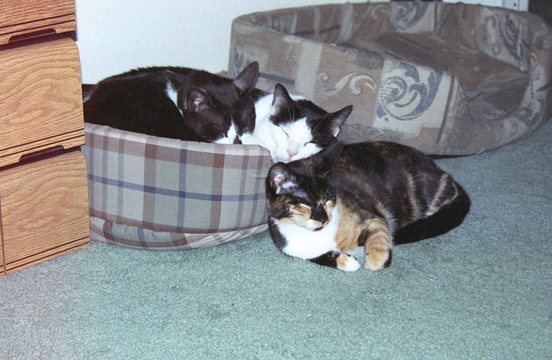 2003 12 - Cats 65.jpg