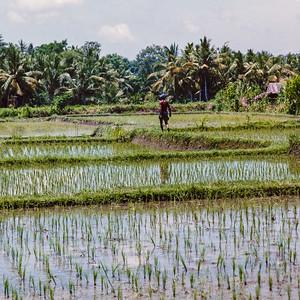 Indonesia 1998