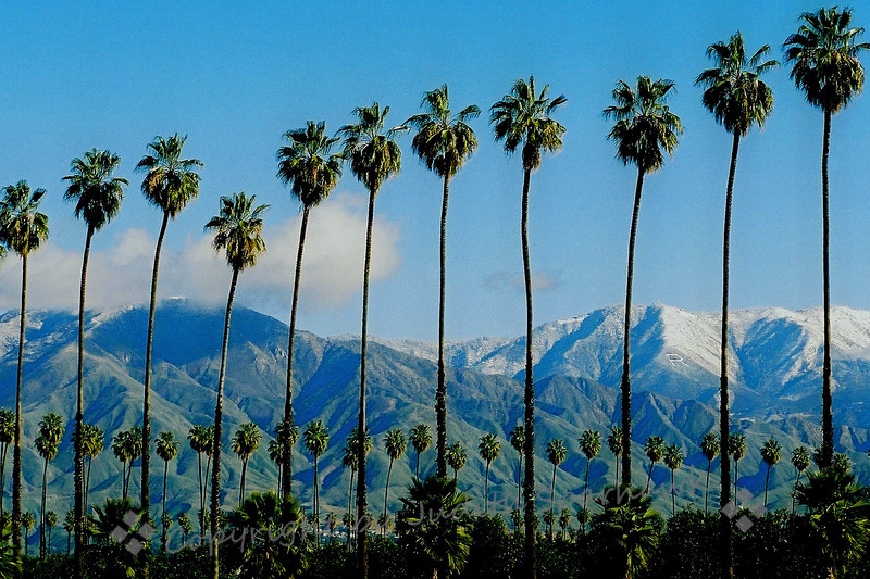 Winter in Redlands ~