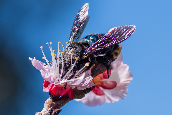 Entomology in Photography