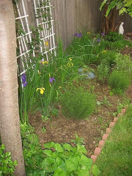 garden-2002-06-0070_std.jpg