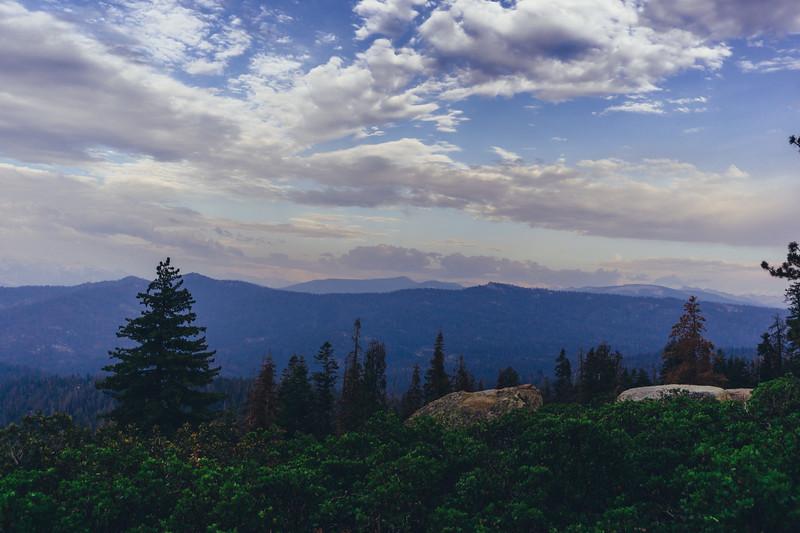 Rui in Sequoia-06964.jpg