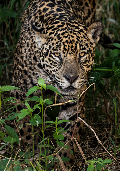 The Pantanal, Brazil 2018