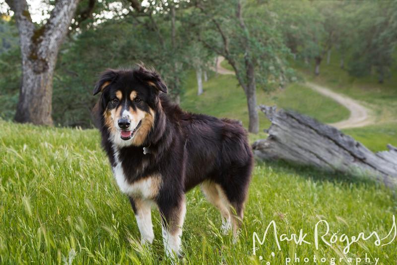 Pet Stock Photography