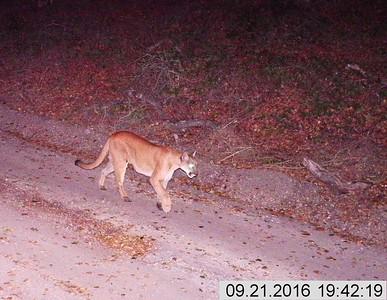 Pismo Preserve LATO Wildlife Images 2016 - Present