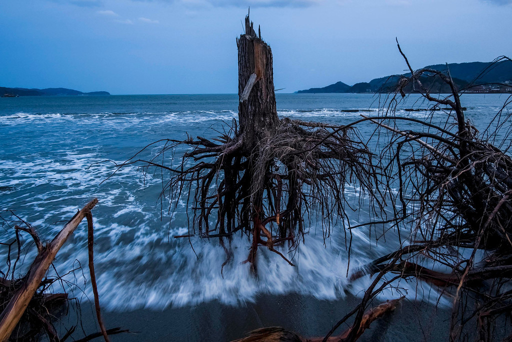 ". Daniel Berehulak of Australia, a photographer working for Getty Images, has won the third prize in the General News Stories category of the World Press Photo Contest 2013 with the series ""Japan after the wave\"". The picture shows pine trees uprooted during the tsunami laying strewn over the beach in Rikuzentakata, taken on March 7, 2012 and distributed by the World Press Photo Foundation February 15, 2013.  REUTERS/Daniel Berehulak/Getty Images/World Press Photo/Handout"