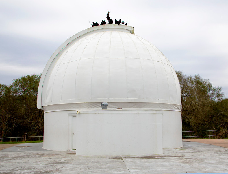 The Black Vultures flurry and reorganize themselves on the observatory dome.