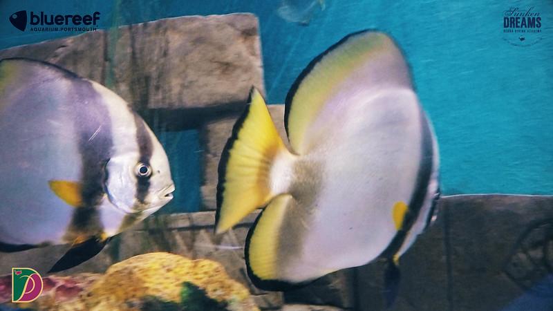 Blue Reef.00_15_34_29.Still019.jpg