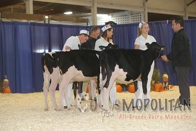 Atlantic Fall Holstein Hfrs 15