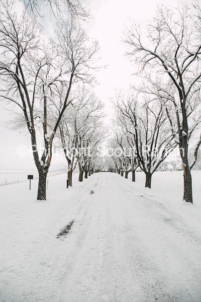 20200213_HenryHibbeln_Snowday-2.jpg