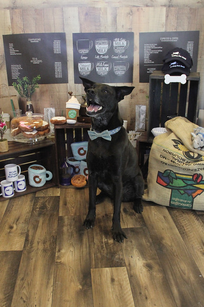 Mill Coffee, Not Puppies March 20, 2021