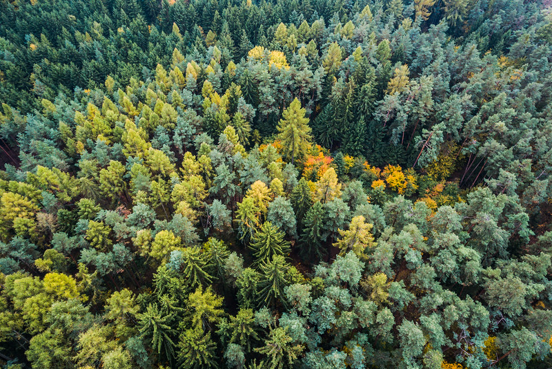 autumn-forest-from-above-picjumbo-com.jpg