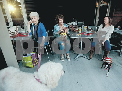allowing-pets-on-the-patio-at-local-restaurants-among-discussion-topics-at-thursday-meeting