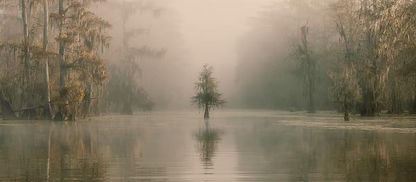 Louisiana - The Swamps