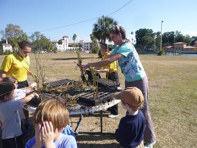 PreK Helps Tampa Bay Watch Plant Salt Marsh Plants
