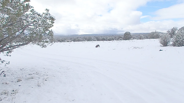Snowshoeing in Arizona with Dogs