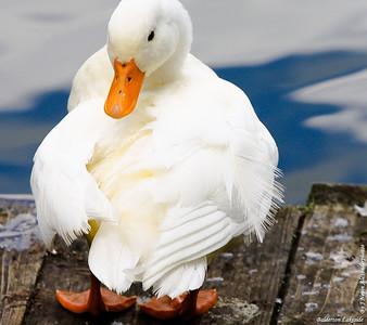 Donald   photo by Balderton Lake John © copyrighted