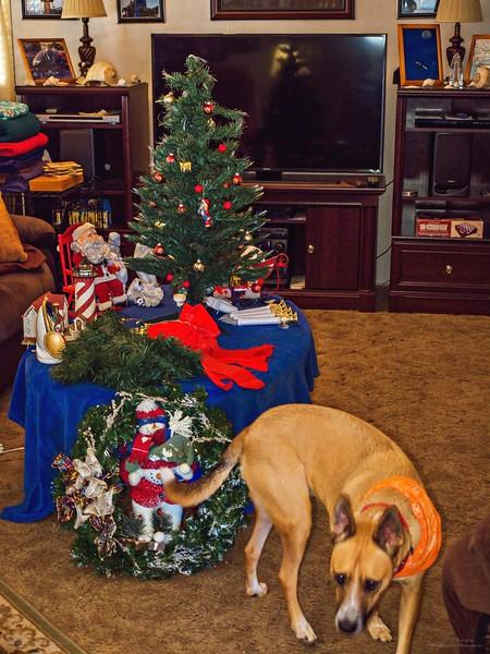 _1050005_2_  pl5 12x40 christmas take down,tip,paws,mal,mov.jpg