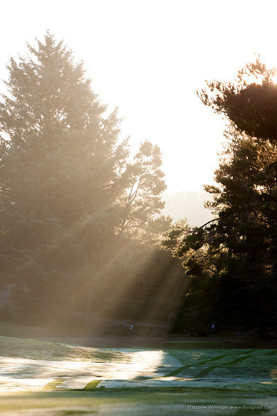 Woodget-130821-039--backlit, golf - sports, mist, trees.jpg