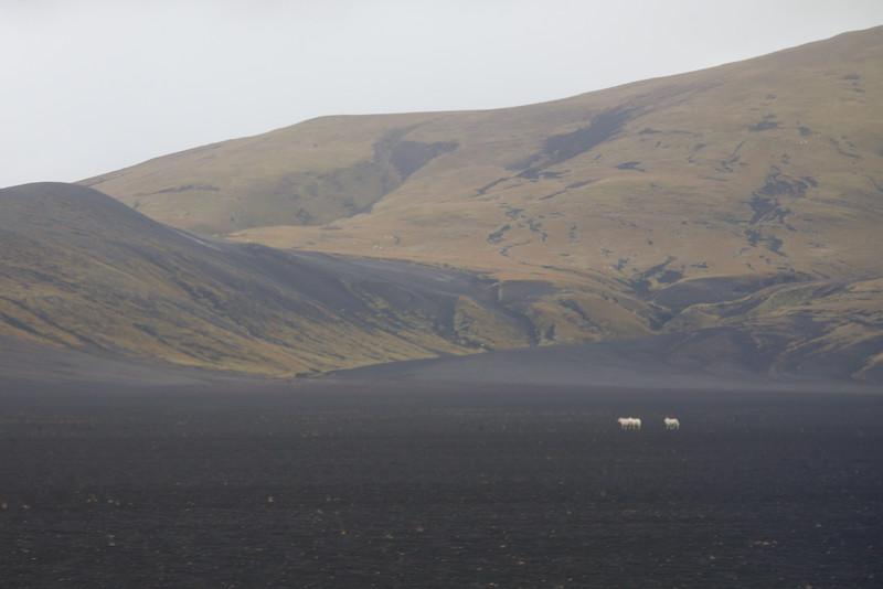 2014 ICELAND-134.jpg