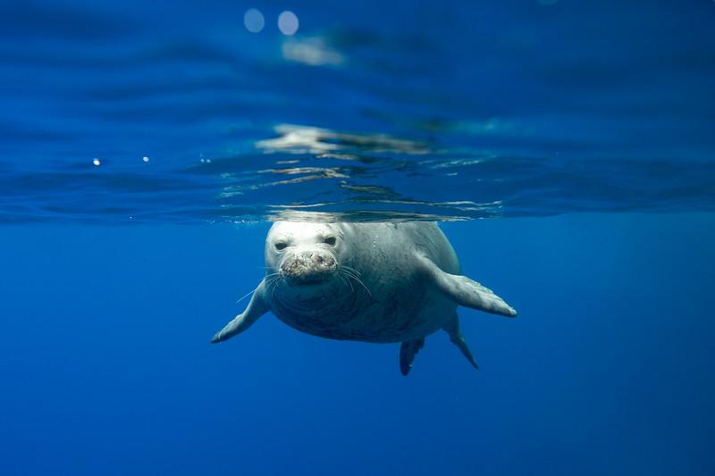 monk seals-29.jpg