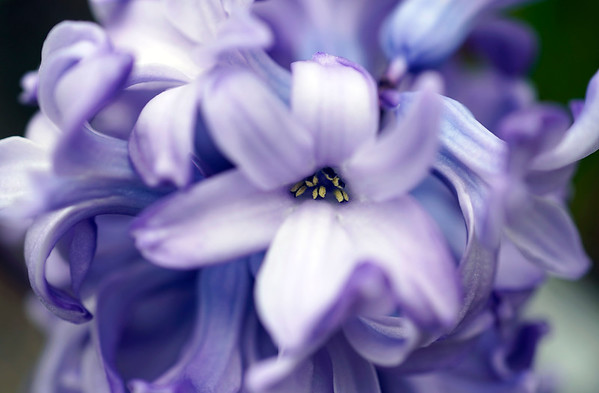 Berkshire Botanical Garden bulb show - 031519