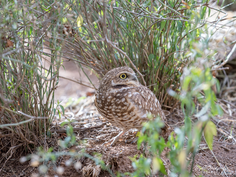 Arizona-Sonora Desert Museum-203.jpg
