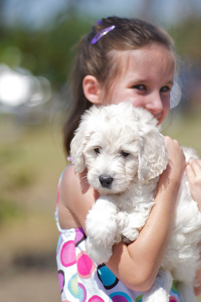 Visiting Lizzie, the Goldendoodle puppy, at 6 weeks