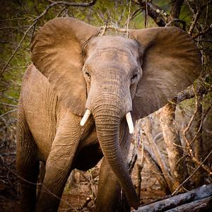 Chacma Camp, Maseke Balule Reserve, Kruger Private Reserves