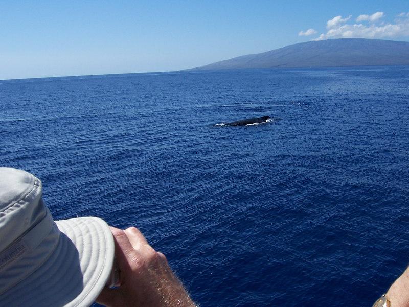More whales swimming around.
