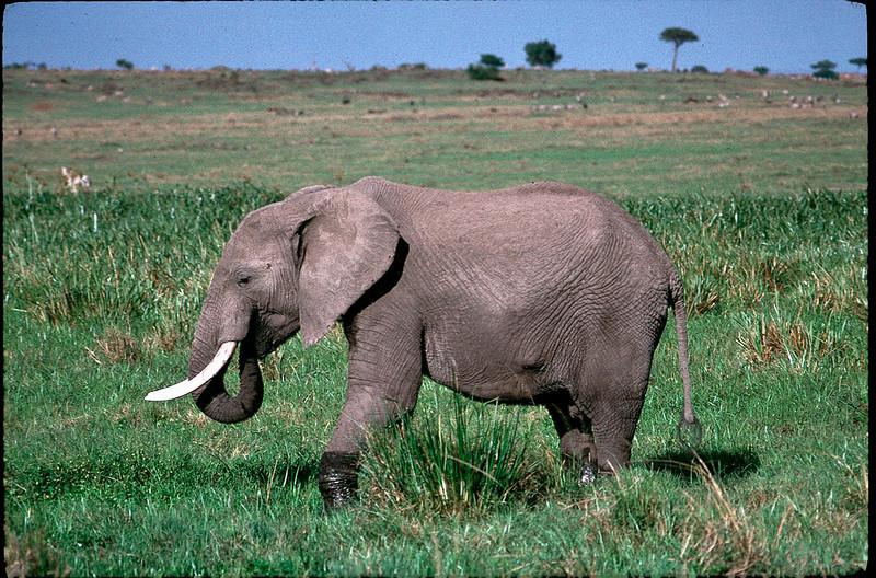 Kenya2_085.jpg