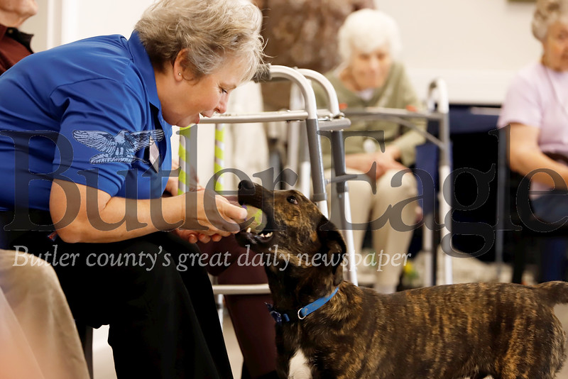 Newhaven Court at Clearview assisted living center community dog Graham plays tug-of-war with life stages associate Kim Novak during a visit to senior exercises. Graham is a Butler Humane Society dog who was adopted by the community and lives at the complex fulltime. Seb Foltz/Butler Eagle
