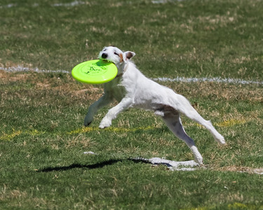 2016 Disc Dog Southern Nationals
