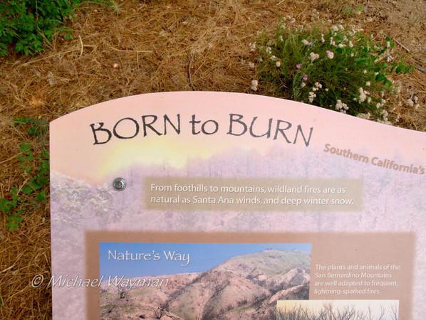 2009/08/21 born to burn
